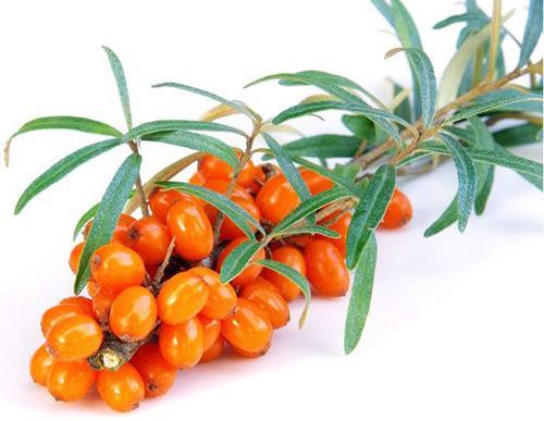 Obraz zawierający roślina, stół, żywność, małe  Opis wygenerowany automatycznie